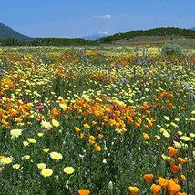 12000 seeds - Midwest Wildflower Mix - $13.86
