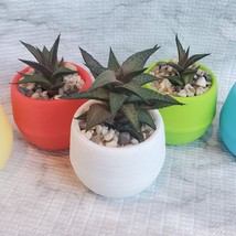 Haworthia Tessellata Succulent in Planter, Colorful Self-Watering Pot image 1