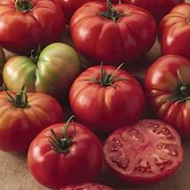 Champion II Hybrid Tomato Seeds (20 Seed Pack) - $2.93