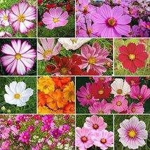 Non GMO Bulk Cosmos Mix Flower Seed (5 LB) - $249.48