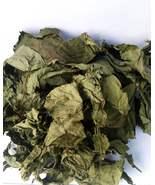 Bitter Leaf - Vernonia Amagydelina - $17.00+