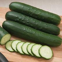 Cutter F1 Hybrid Cucumber Seeds (50 Seeds) - $5.99
