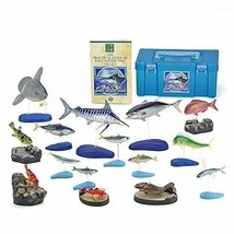 Colorata Salt water Fish Solid Illustrated book Real figure box - $64.49