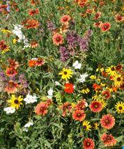 SHIP FROM US 3,000 Florida & Gulf Coast Wildflower Mix Seeds, ZG09 - $19.56