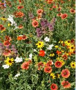 SHIP FROM US 3,000 Florida & Gulf Coast Wildflower Mix Seeds, ZG09 - $19.56