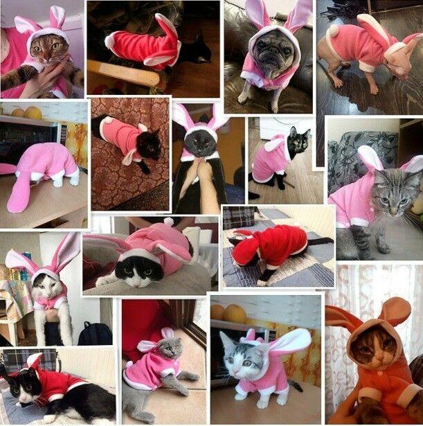 New Mascotas Costume For Pet Hoodies Cute Rabbit Cat Warm Jacket