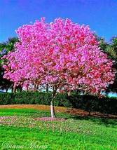 Red Dogwood seedlings! - $26.95