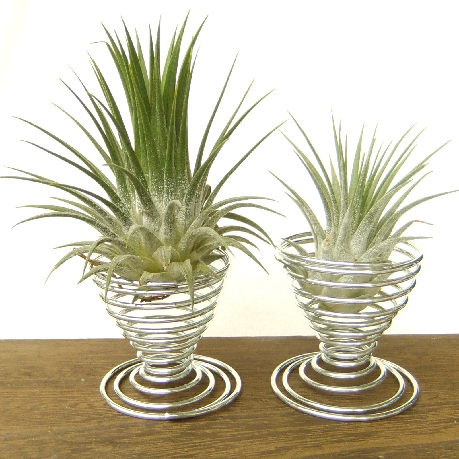 2 Metal Air Plant Tillandsia Holder Container Flower Planter Office Desk Decor