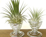 2pcs Metal Air Plant Tillandsia Holder Container Flower Planter Desk Home Decor