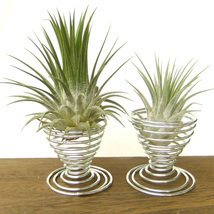 2 Metal Air Plant Tillandsia Holder Container Flower Planter Office Desk... - $153,28 MXN
