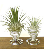 2 Metal Air Plant Tillandsia Holder Container Flower Planter Office Desk... - £6.40 GBP