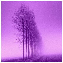 Violet autumn trees image photo picture free shipping - $0.57