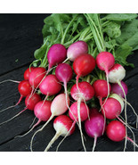SHIP FROM US 10 G ~940 SEEDS - ORGANIC EASTER EGG RADISH SEEDS - NON-GMO... - $18.56
