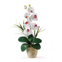 Single Stem Phalaenopsis Silk Orchid Arrangement - $39.78