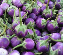 100pcs Very Delicious Edible Thai Purple Mini Round Eggplant Seeds IMA1 - $13.95