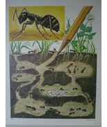 Life Science Art Print - Ant Colony Cutaway View - Vintage David C Cook ... - $11.38