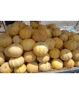 SHIP From US, 25 Seeds GIANT! Sweet Juicy Cantaloupes, DIY Healthy Veget... - $24.99