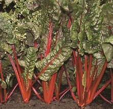 Ruby Red Swiss Chard Seed - Leafy Garden Vegetable Greens Seeds (3gr or ... - $4.45+