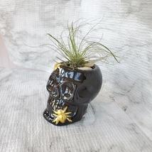 Skull with Air Plant, Ceramic Skull Planter, Black Skull, Halloween, Day of Dead image 3