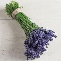 Ellagance Purple Lavender Seed  / Lavender Flower Seeds - $17.00