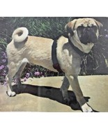 Anti-Pull Anti-Slip Harness For Dogs For Use With Collar & Leash Small B... - $18.69