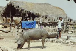 35mm Slide TUP Nepal Local Small Village Life (#80) - $4.75