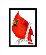 Cardinal Pen and Ink Print - $29.00