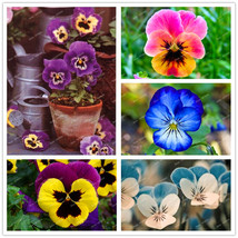 100pcs/pack pansy seeds Mix Color Wavy Viola Tricolor Flower Seeds Free ... - $8.07