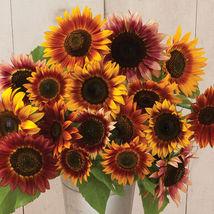 Autumn Beauty Sunflower Seed, Sunflower Seeds - $21.00