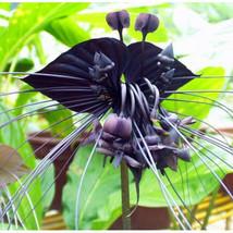 50 Seeds Tiger Orchid Flowers Seeds Rare Flower Orchid Garden Home Plants Bonsai - $2.99