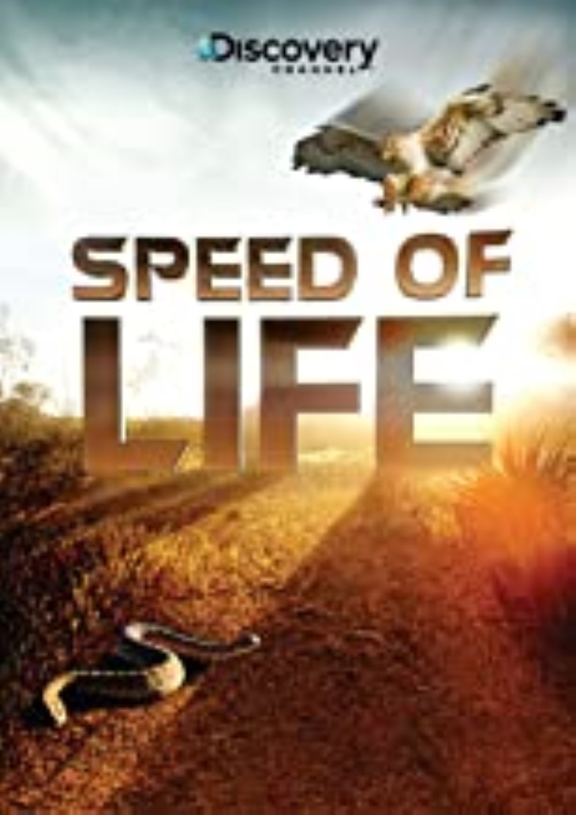 Speed of Life Dvd