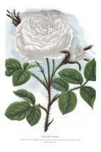 Seed Catalog: White Moss - Seneca Seed Catalog - 1893 - $12.95+