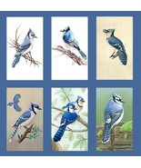 6 Blue Jay Magnets - $17.99