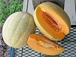 40+HALES BEST JUMBO CANTALOUPE Seed Organic American Heirloom Melon 85 D... - $2.75