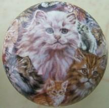 Cabinet Knob  Cat Kitten Collage knobs - $5.25