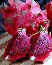 "PURPLE FLESH PITAYA exotic rare tropical fruit edible good eat planta 4"" Plant - $32.00"