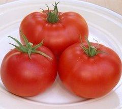 1000 Seeds of Champion II Vfnt Hybrid - Tomatoes Mid Season - $112.66