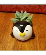 "Echeveria Succulent in Ceramic Penguin Planter, 5"", Glazed Pot with Live... - $16.99"