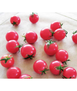 """ 100 PCS SEEDS Sweet Treats Hybrid Pink Cherry Tomato Seeds GIM "" - $10.00"