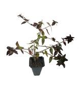 Bell Plant sample item
