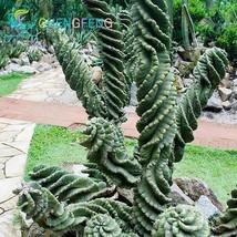 100pcs Blue Rare Cactus Seeds Japanese Best-selling Succulents Hot summe... - $2.96