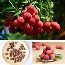 1DDC 10x Sweet Lychee Litchi Seasonal Fruit Leechee Seeds Garden Plot Pl... - $2.27