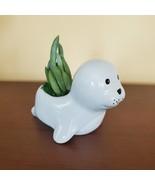 """Ceramic Seal Planter w/ Succulent, live plant, 4"""" animal pot, Blue Chalk... - £12.31 GBP"""