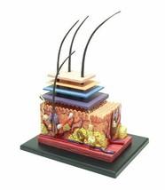 Aoshima Bunka Kyozai Sky Netz Solid Puzzle 4D Vision Mensch Körper Dissecti - $48.77