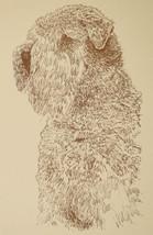 SOFT COATED WHEATEN TERRIER DOG ART Kline Drawing #30 - $49.95