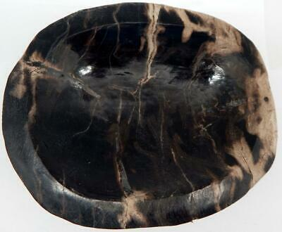 "Primary image for Petrified Wood Bowl Fossil Display or Use 7"" 5 lb. 11.2 oz.  A815"