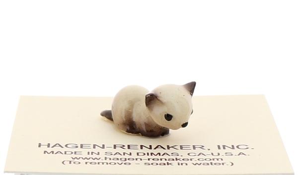 Tiny siamese kittens20