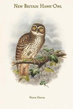 Ninox Odiosa - New Britain Hawk-Owl by John Gould - Art Print - $19.99+