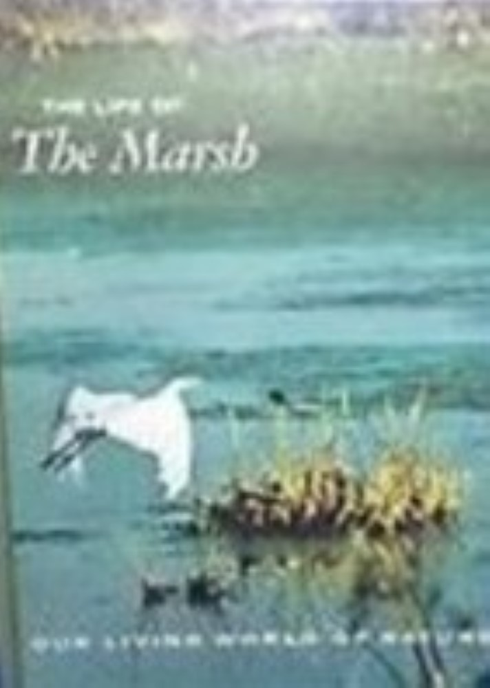 The Life of the Marsh: The North American Wetlands by Niering, William A.