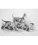 1801 ORIGINAL ETCHING Print by Howitt - Happy Dogs Family - $30.60